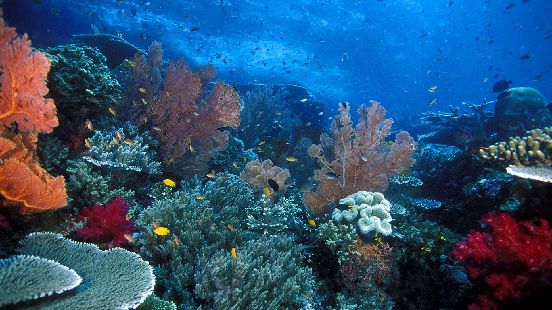 beautiful-Raja-Ampat-is-a-hidden-paradise-island